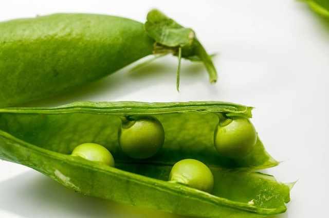 An open pea pod containing peas